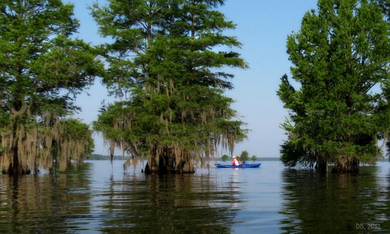 lake marion homes
